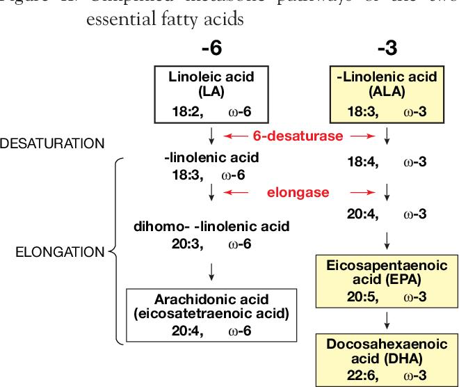 PDF] Omega-6 and omega-3 fatty acid nutrition amongst