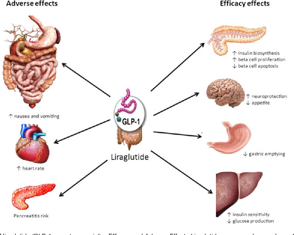 Liraglutide for weight management: a critical review of the evidence ...