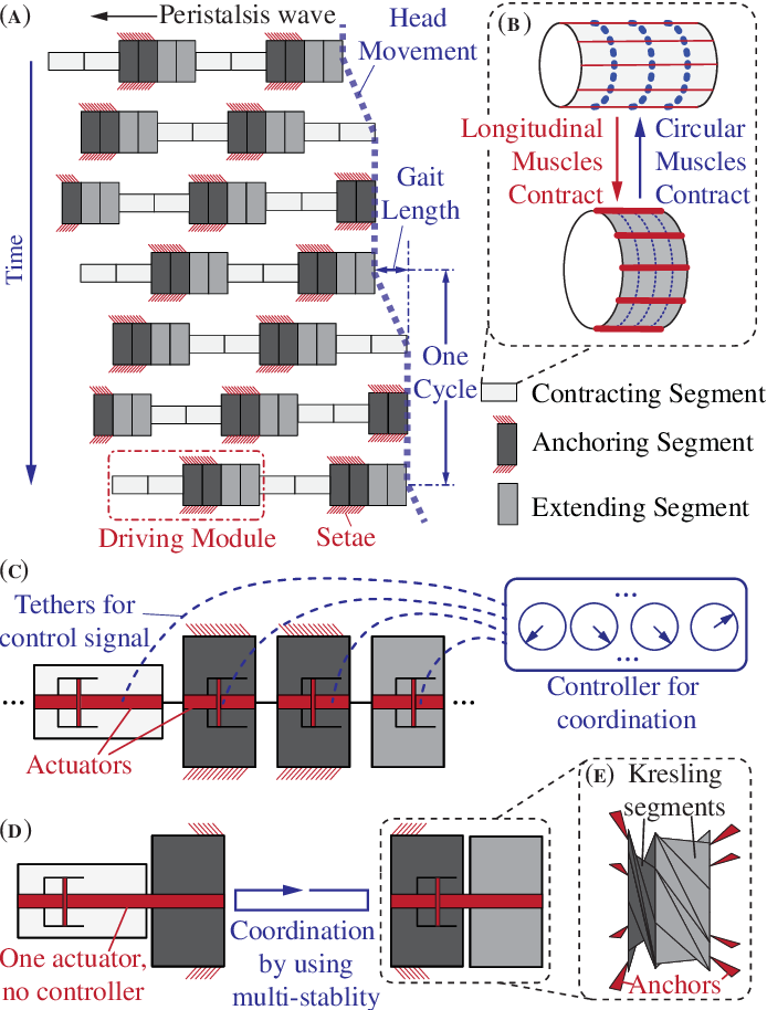 Figure 1 for Peristaltic locomotion without digital controllers: Exploiting the origami multi-stability to coordinate robotic motions