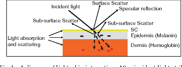 a diagram of light–skin interaction  after incident light strikes
