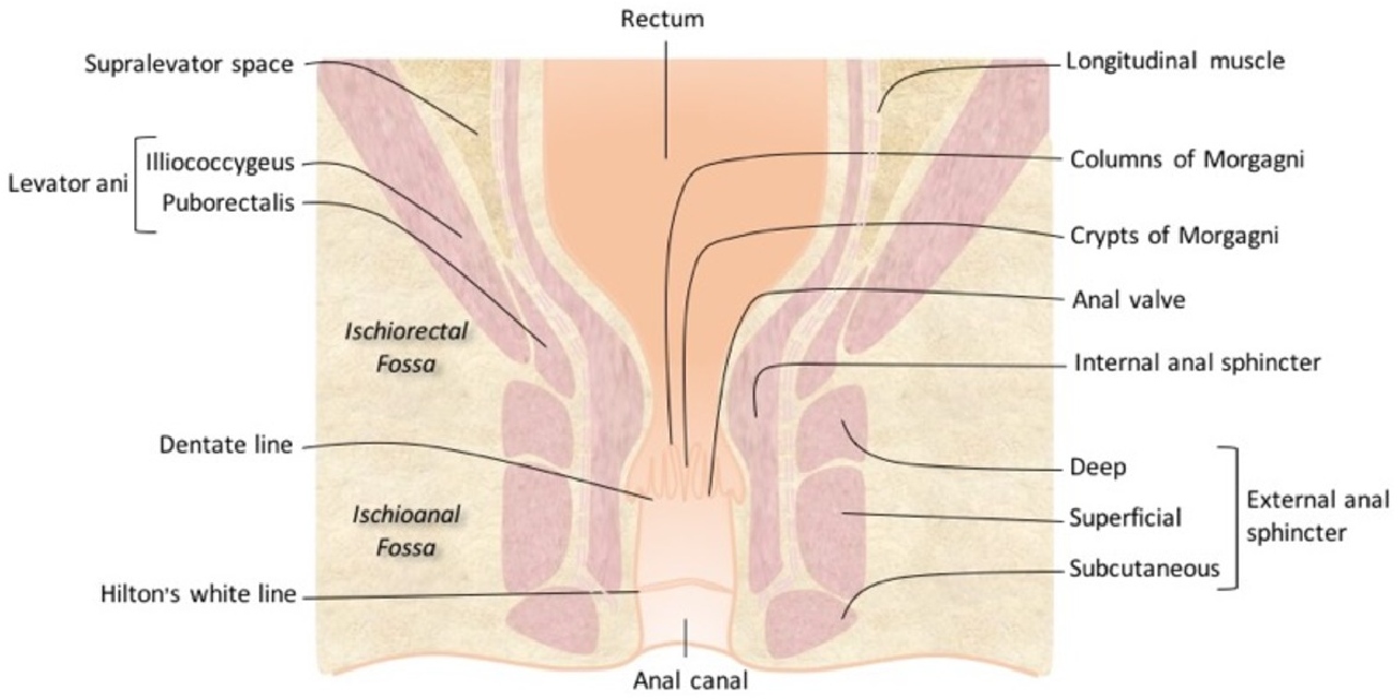 Figure 1 From Mr Imaging Of Fistula In Ano Semantic Scholar