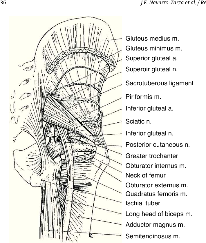 Figure 5 From Clinical Anatomy Of The Pelvis And Hip Semantic Scholar