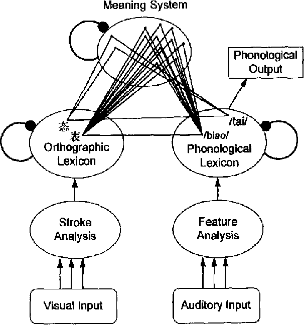 The Time Course Of Graphic Phonological And Semantic Activation