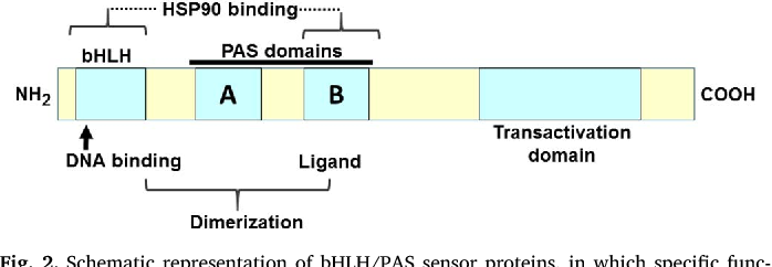 Figure 2 from Aryl hydrocarbon receptor (AHR):