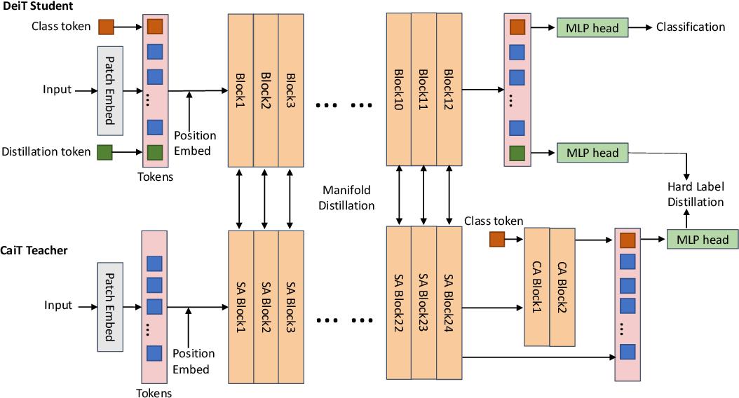Figure 3 for Efficient Vision Transformers via Fine-Grained Manifold Distillation
