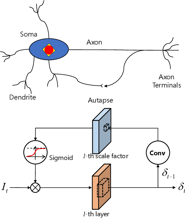 Figure 1 for BackEISNN: A Deep Spiking Neural Network with Adaptive Self-Feedback and Balanced Excitatory-Inhibitory Neurons