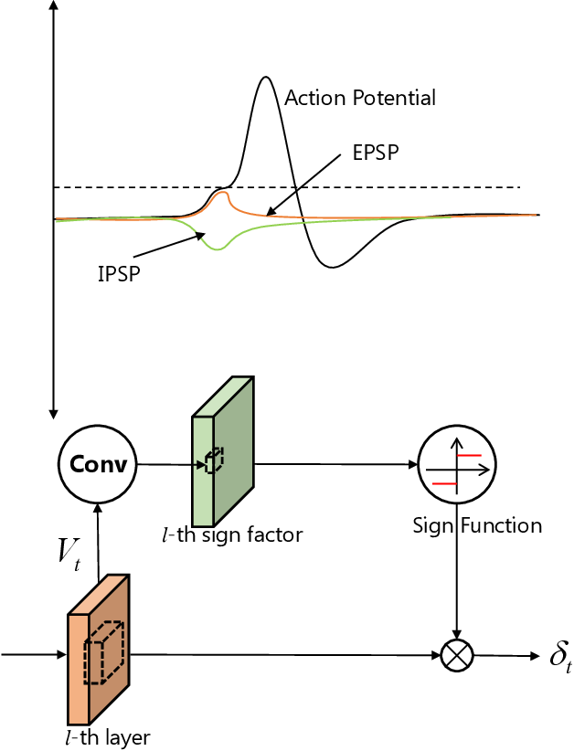 Figure 4 for BackEISNN: A Deep Spiking Neural Network with Adaptive Self-Feedback and Balanced Excitatory-Inhibitory Neurons