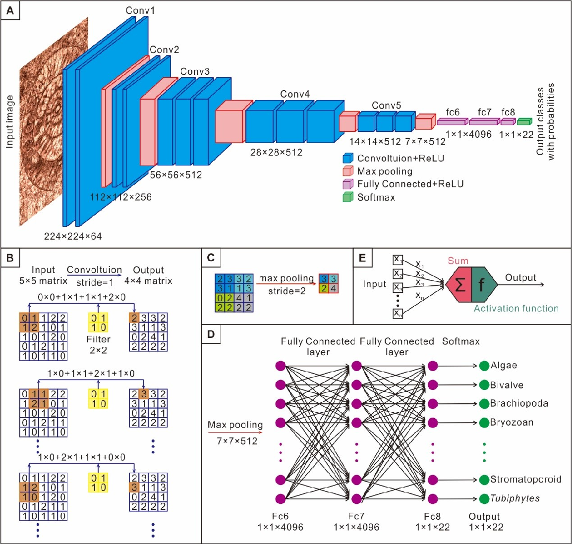 Figure 2 for Automatic identification of fossils and abiotic grains during carbonate microfacies analysis using deep convolutional neural networks