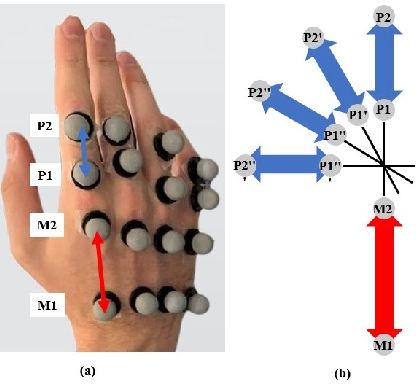 Figure 3 for Prediction of Metacarpophalangeal joint angles and Classification of Hand configurations based on Ultrasound Imaging of the Forearm
