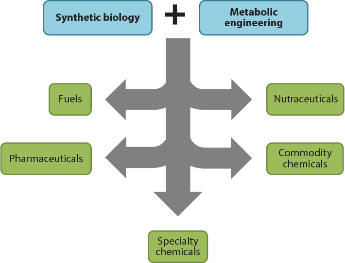 Figure 2 from Synthetic Biology for Specialty Chemicals