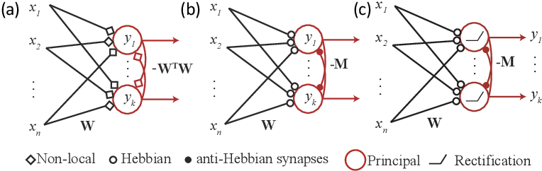 Figure 1 for A Similarity-preserving Neural Network Trained on Transformed Images Recapitulates Salient Features of the Fly Motion Detection Circuit