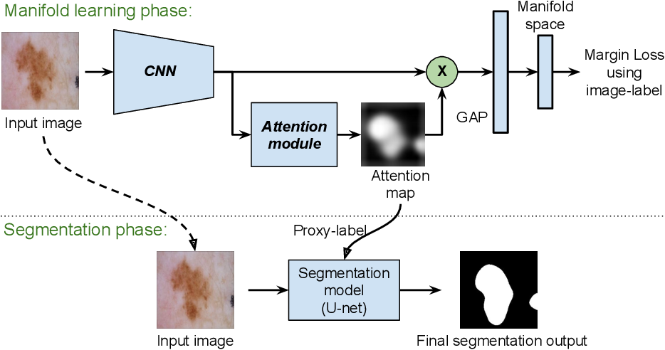 Figure 1 for Manifold-driven Attention Maps for Weakly Supervised Segmentation