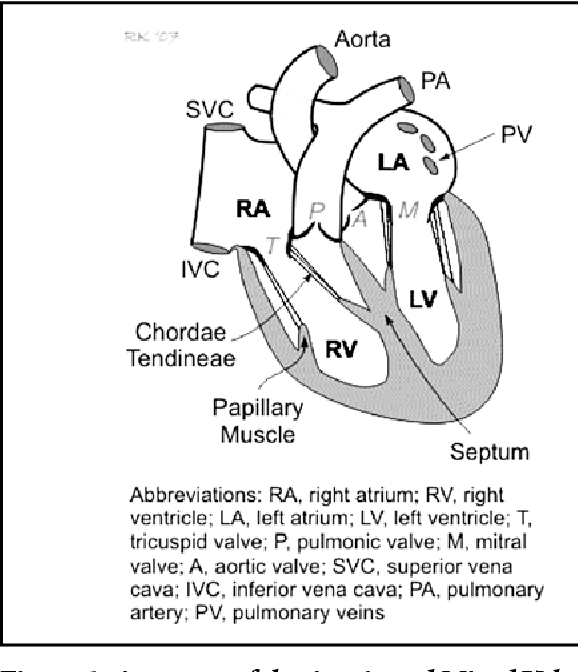 Figure 1 From Heart Sounds Are You Listening Part 2 Semantic