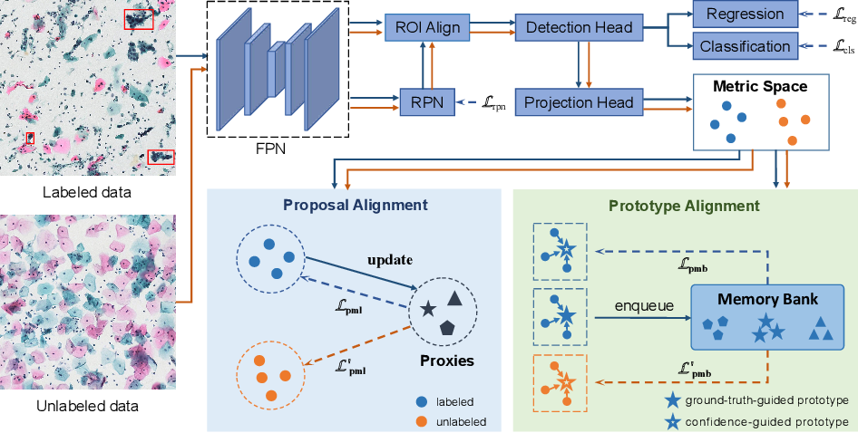 Figure 1 for Deep Semi-supervised Metric Learning with Dual Alignment for Cervical Cancer Cell Detection