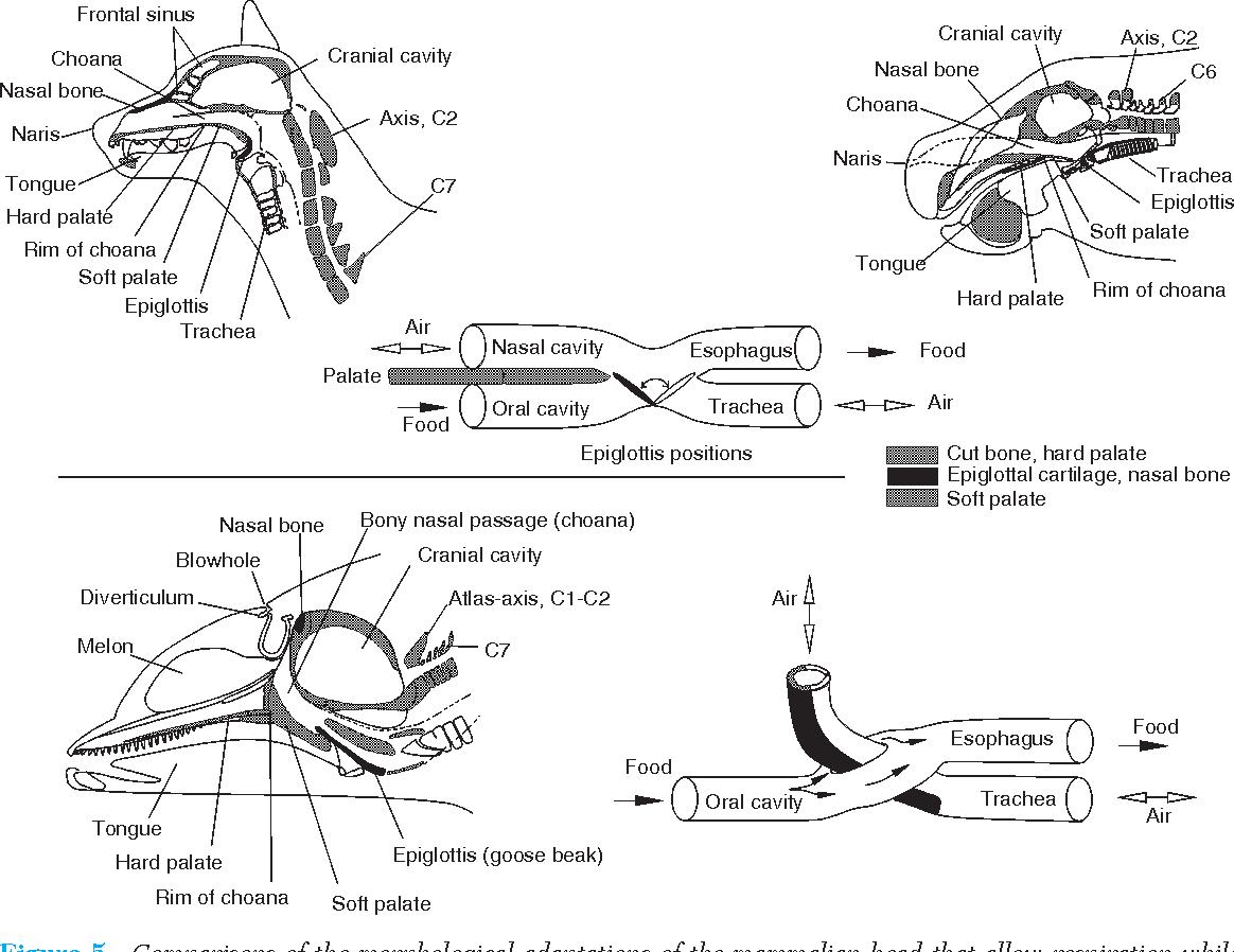 Figure 9 from Skull Anatomy - Semantic Scholar