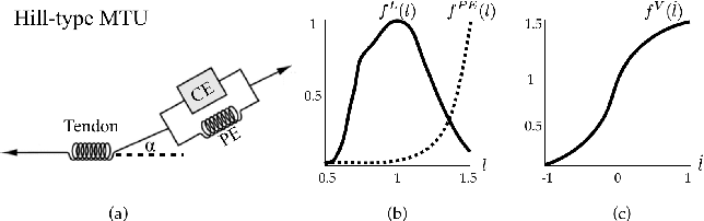 Figure 4 for Synthesis of Biologically Realistic Human Motion Using Joint Torque Actuation