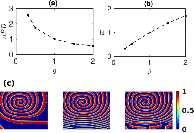 PDF] Ionic-heterogeneity-induced spiral- and scroll-wave