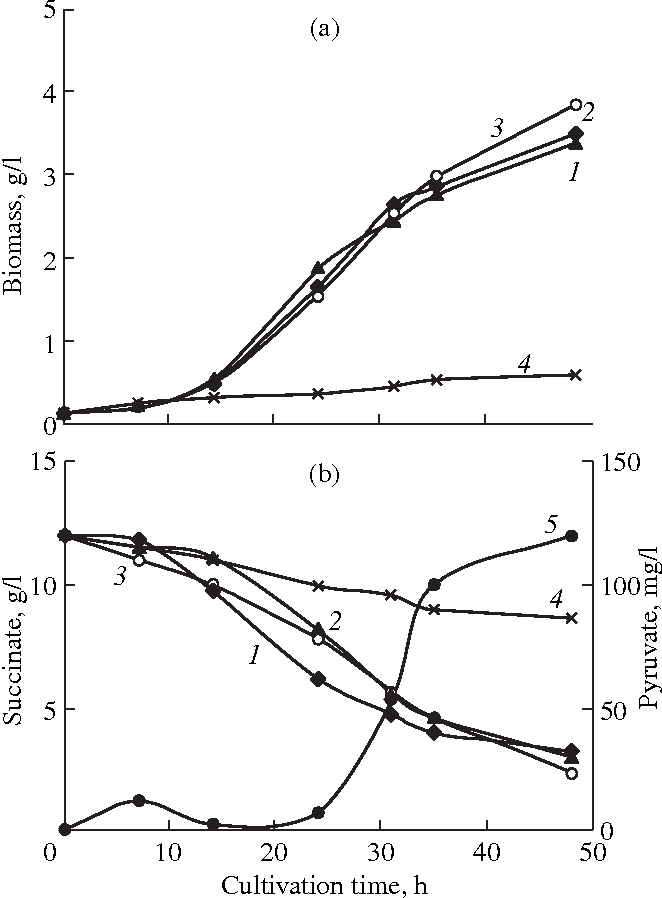 Figure 2 From The Effect Of Succinate On Respiration Transamination