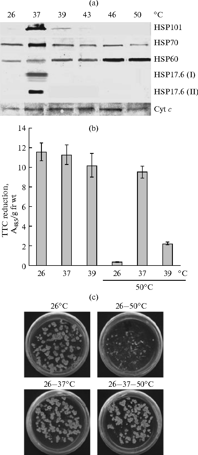 Role of mitochondria in the operation of calcium signaling system in