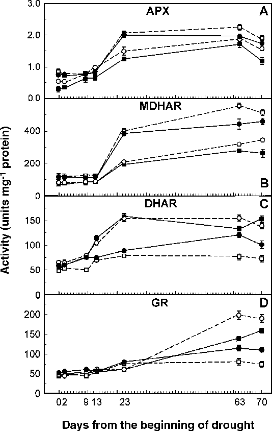 Fig. 4. Activities of ascorbate peroxidase (APX), monodehydroascorbate redictase (MDHAR), dehydroascroabate reductase (DHAR) and glutathione reductase (GR) in drought-stressed plants at 0, 2, 9, 13, 23, 63 and 70 days from the beginning of the drought period. Each value represents the mean of three measurements ( S.E.) from three plants having a similar level of drought stress. Hybrids: P3605 (& , —), 6–5 (*, —), 7–7 (&, - - -), 8–9 (*, - - -).