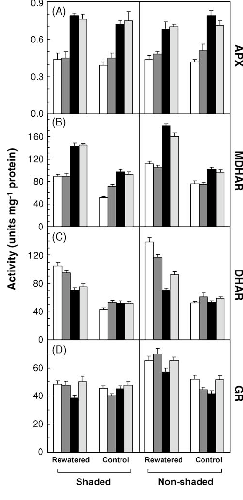 Fig. 6. Activities of ascorbate peroxidase (APX), monodehydroascorbate redictase (MDHAR), dehydroascroabate reductase (DHAR) and glutathione reductase (GR) in shaded and non-shaded leaves of rewatered plants and in the relevant control plants. Samples were collected after 36 days from the beginning of the rewatering period. Each value represents the mean of three measurements ( S.E.) from three plants. Hybrids: P3605 (white columns), 8–9 (deep grey), 6–5 (black), 6–5 (light grey).