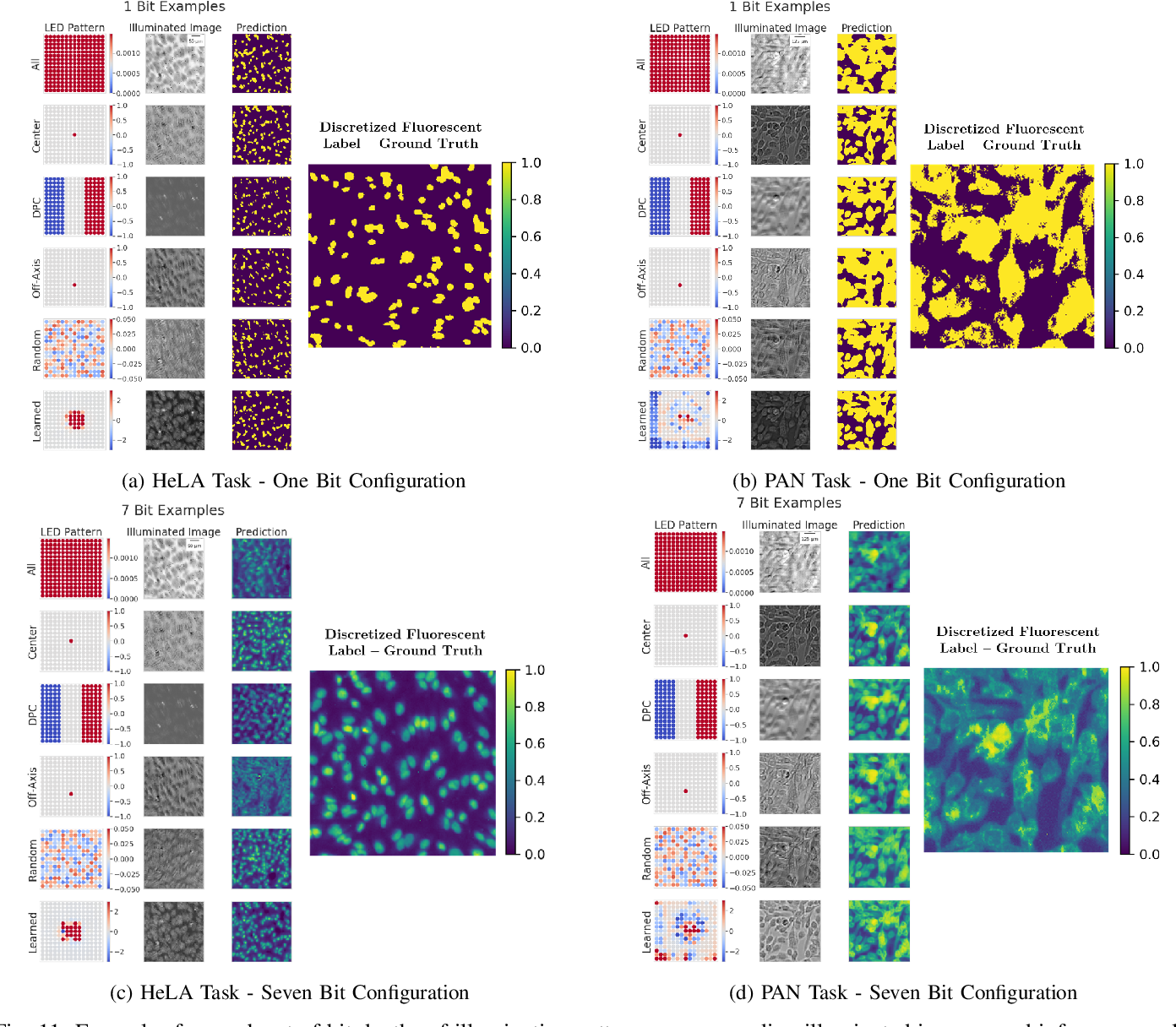 Figure 3 for Physics-enhanced machine learning for virtual fluorescence microscopy