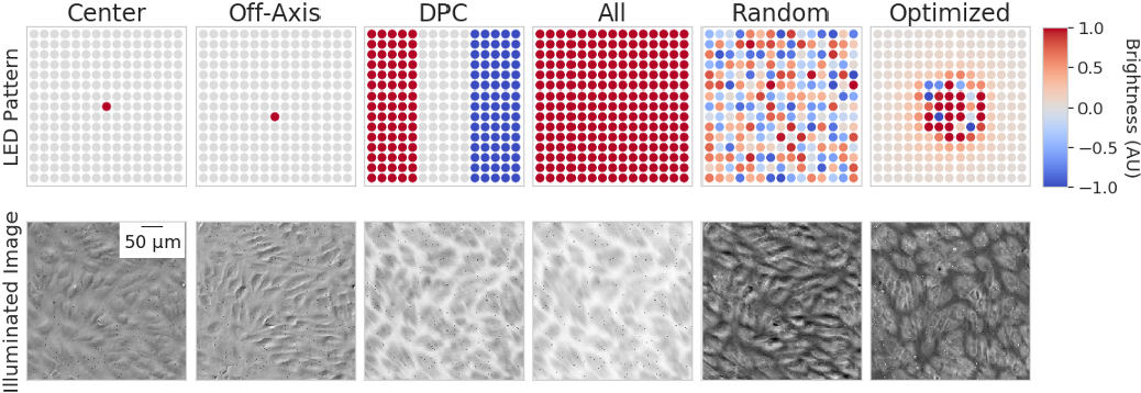 Figure 4 for Physics-enhanced machine learning for virtual fluorescence microscopy