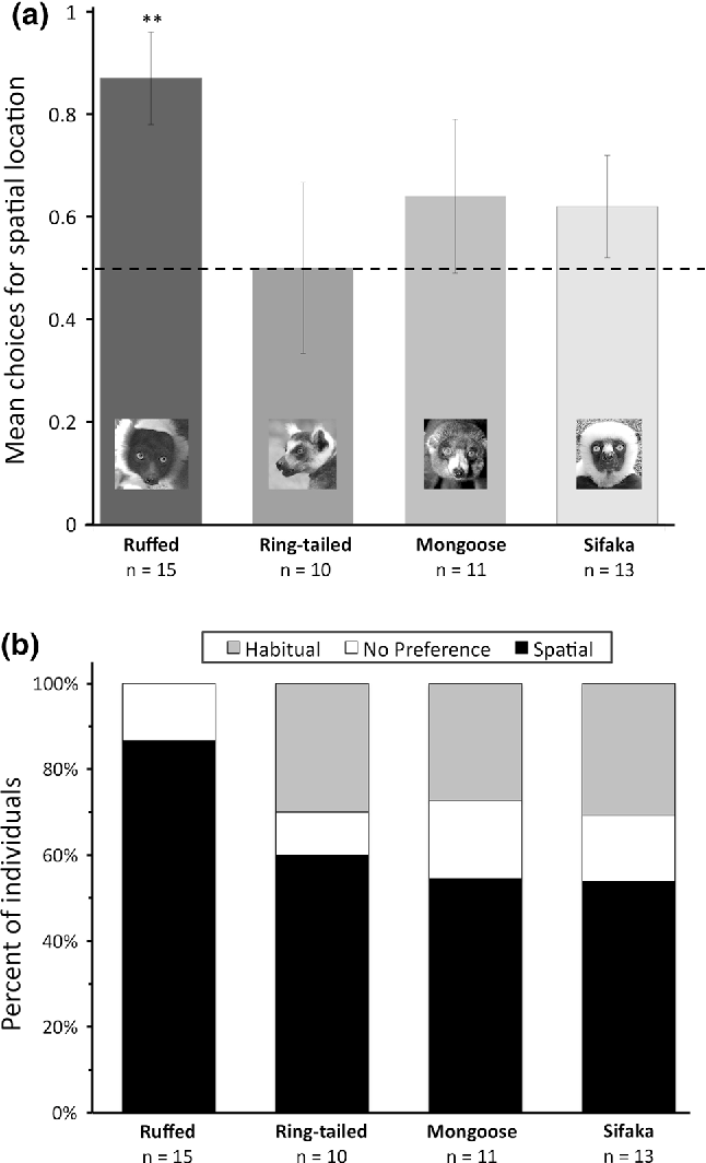 Fig. 3 Results from Study 2 (memory mechanisms). After completing initial learning trials, lemurs completed probe trials (from a flipped orientation) to assess their strategy. a First probe trial performance by species. b Individual strategies (spatial bias, no preference, or habit bias) across probe trials by species. Dashed line indicates chance; error bars indicate standard error; **p \ 0.01