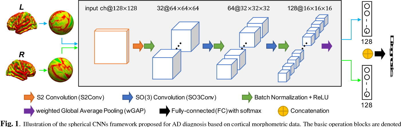 Figure 1 for Discriminative analysis of the human cortex using spherical CNNs - a study on Alzheimer's disease diagnosis