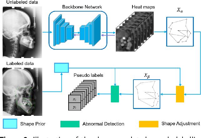 Figure 3 for Semi-supervised Anatomical Landmark Detection via Shape-regulated Self-training