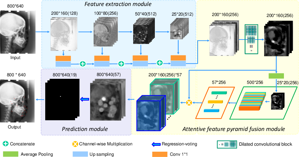 Figure 1 for Cephalometric Landmark Detection by AttentiveFeature Pyramid Fusion and Regression-Voting