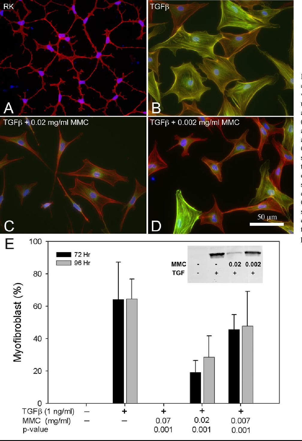 Quiescent keratocytes fail to repair MMC induced DNA damage