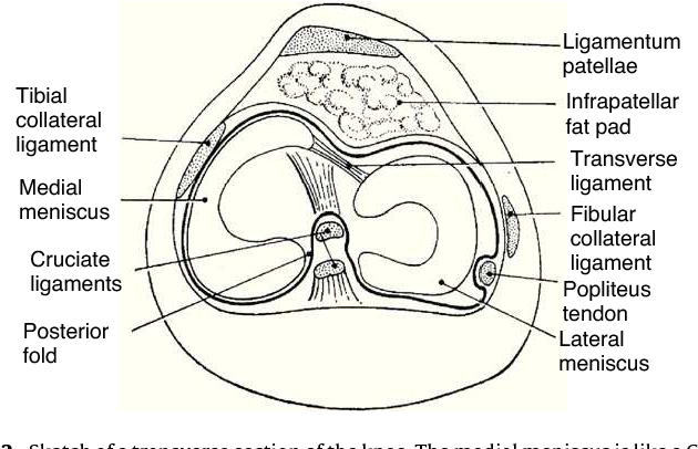 Figure 2 from Clinical anatomy of the knee. - Semantic Scholar