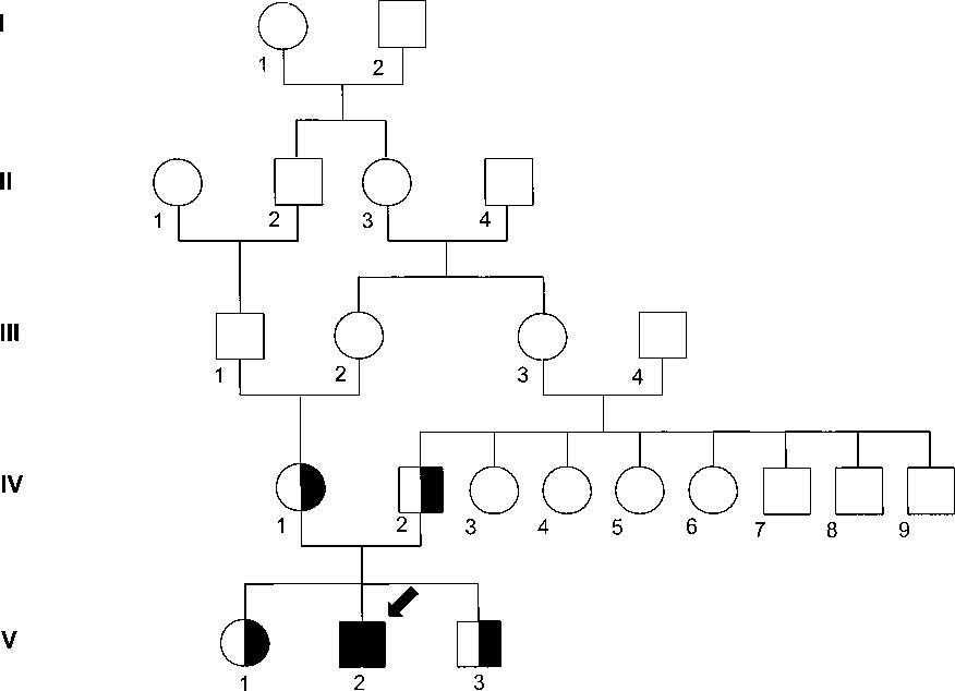 Figure 1 From Fh Freiburg A Novel Missense Mutation C317y In
