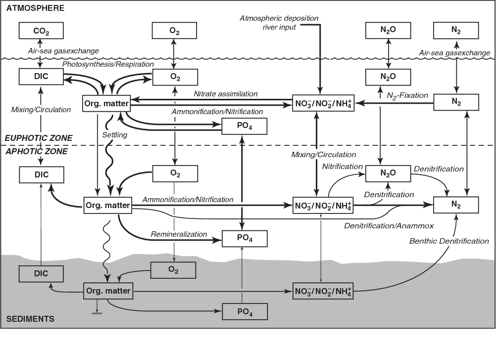Figure 1.8 from The Marine Nitrogen Cycle: Overview and ... on diagram of autotroph, diagram of citric acid cycle, diagram of air pollution, diagram of auditory system, diagram of nutrition, carbon cycle, diagram of grasslands, diagram of life cycle, diagram of oxygen cycle, diagram of land use, diagram of krebs cycle, diagram of phosphorus cycle, diagram of sediment, diagram of community, diagram sulfur cycle, diagram of translation process, diagram of organism, diagram of nitrogen cell, diagram of mutation, diagram of scientific process,