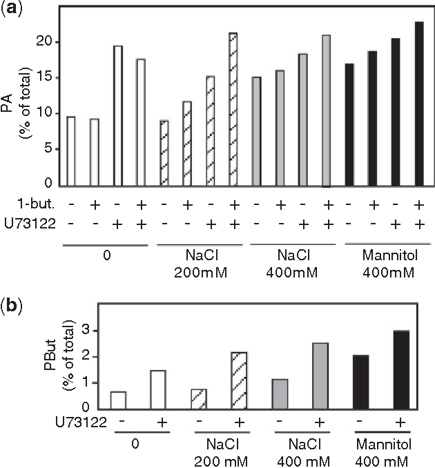 Fig. 6 Lipid signaling in Thellungiella salsuginea seedlings in response to salt or mannitol stress. Seedlings were labeled with 33P for 24 h and then treated with water, 200 mM or 400 mM NaCl, or 400 mM mannitol in the presence or absence of 0.5% 1-butanol and/or 100 mM U73122. Lipids were extracted, separated by the methods of Lepage (1967) for PA quantification or of Lepage (1967) for PBut measurement, and quantified by phosphorimaging as described in the Materials and methods. Quantification of PA (a) and PBut (b) levels by PhosphorImager. After normalization, the results are expressed as the percentage of the total radioactivity found within the phospholipids. The data shown correspond to one representative experiment out of three performed.