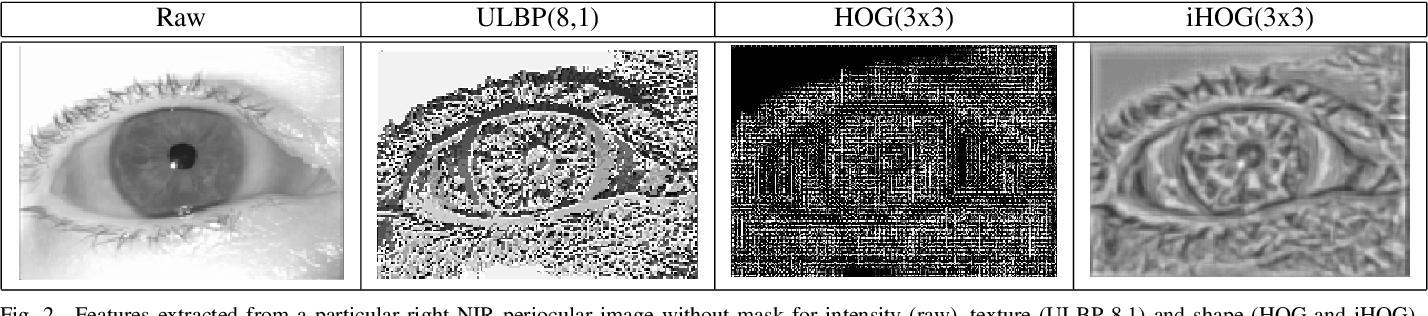 Figure 2 for Relevant features for Gender Classification in NIR Periocular Images