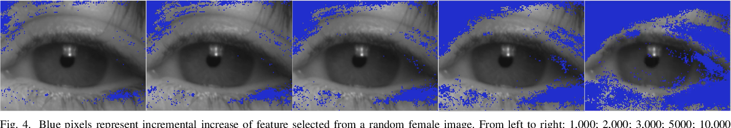 Figure 4 for Relevant features for Gender Classification in NIR Periocular Images