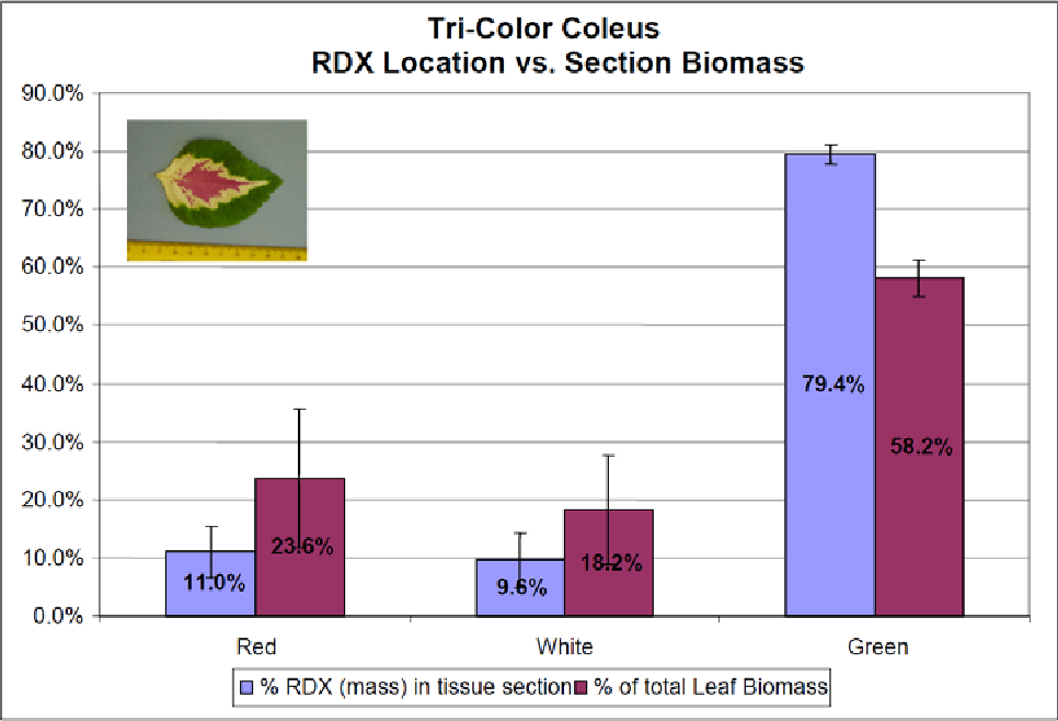 Figure 5. Location of RDX by mass in each corresponding section of tri-color coleus. The RDX is located primarily in the green leaf margins. However, no significant difference exists in RDX concentration between the red and white leaf sections (n = 4).