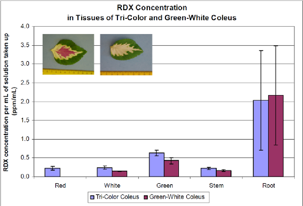 Figure 7. RDX concentration in all plant tissues for two varieties. Concentration of RDX in each tissue standardized by mL of RDX-water solution taken-up by each plant (n = 4, tri-color coleus; n = 4, green-white coleus).