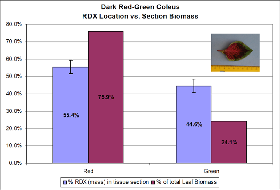 Figure 8. RDX distribution within the dark red-green coleus. The RDX is located primarily in the marginal green leaf tissue (n = 5, RDX mass; n = 1, leaf biomass).