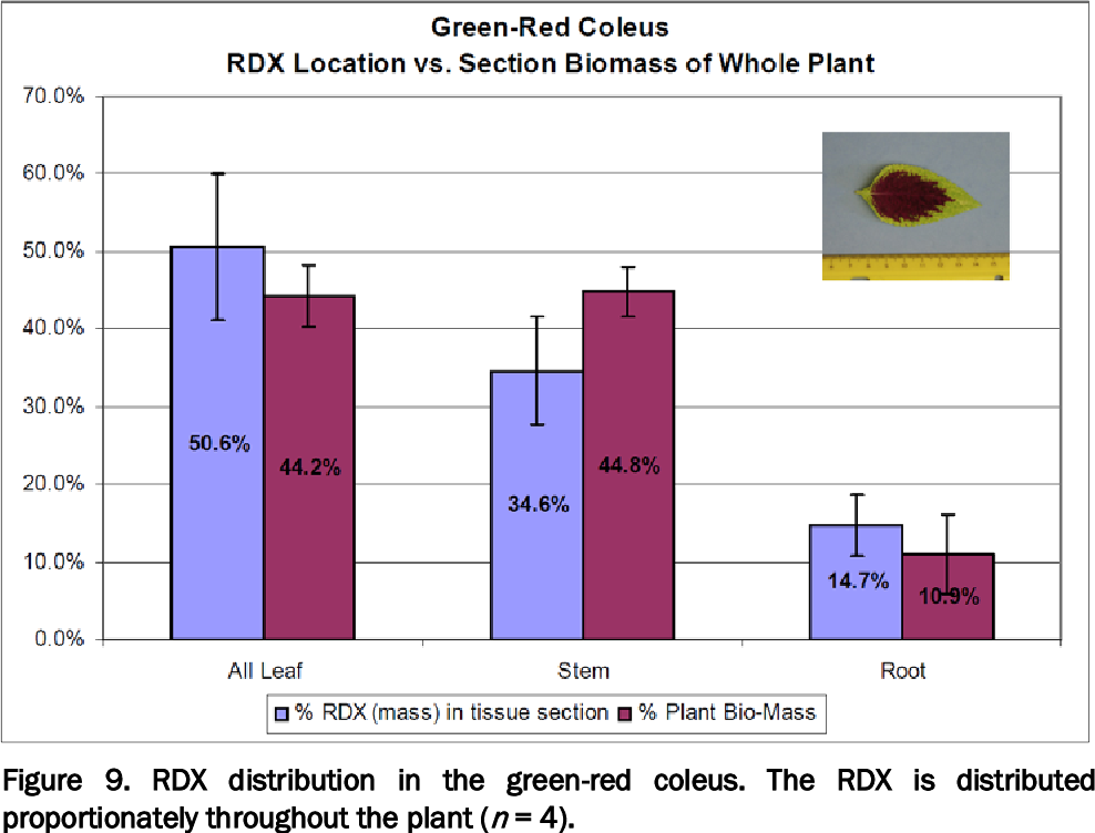 Figure 9. RDX distribution in the green-red coleus. The RDX is distributed proportionately throughout the plant (n = 4).