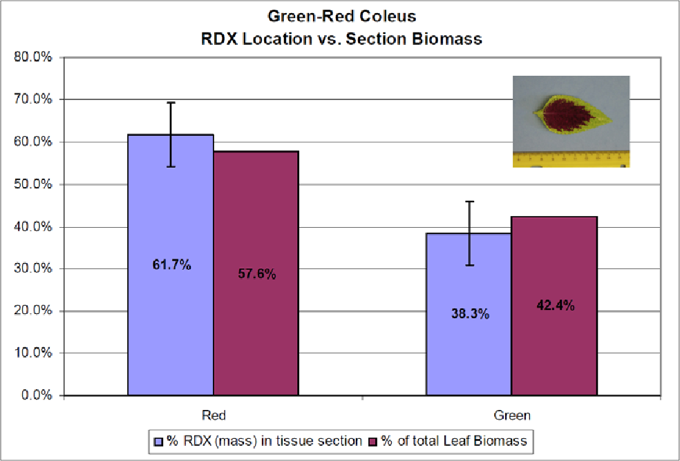 Figure 10. RDX distribution in the leaf tissue of green-red coleus. The RDX is distributed proportionately to the tissue mass and does not correspond to pigmentation pattern (n = 4, RDX mass; n = 1, leaf biomass).