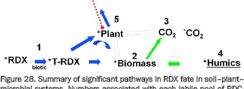 Figure 28. Summary of significant pathways in RDX fate in soil–plant– microbial systems. Numbers associated with each labile pool of RDCderived C are discussed below.