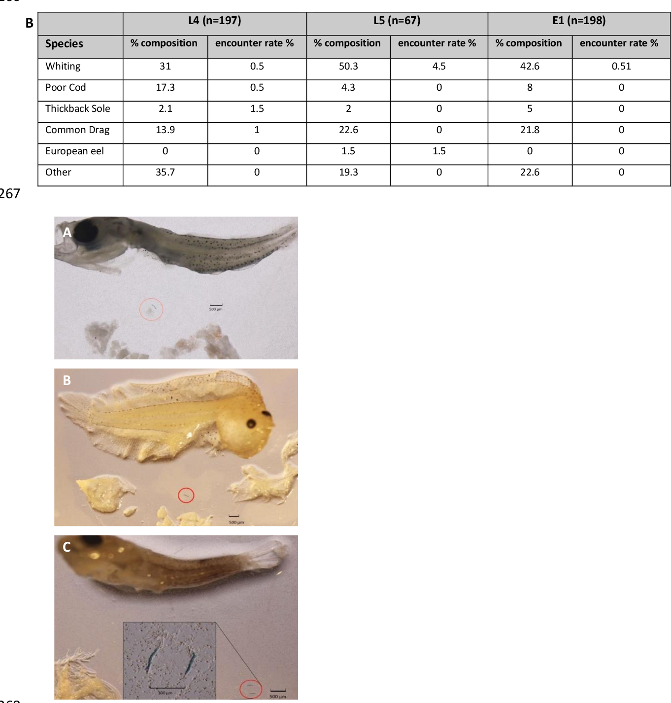 Microplastic ingestion in fish larvae in the western English Channel