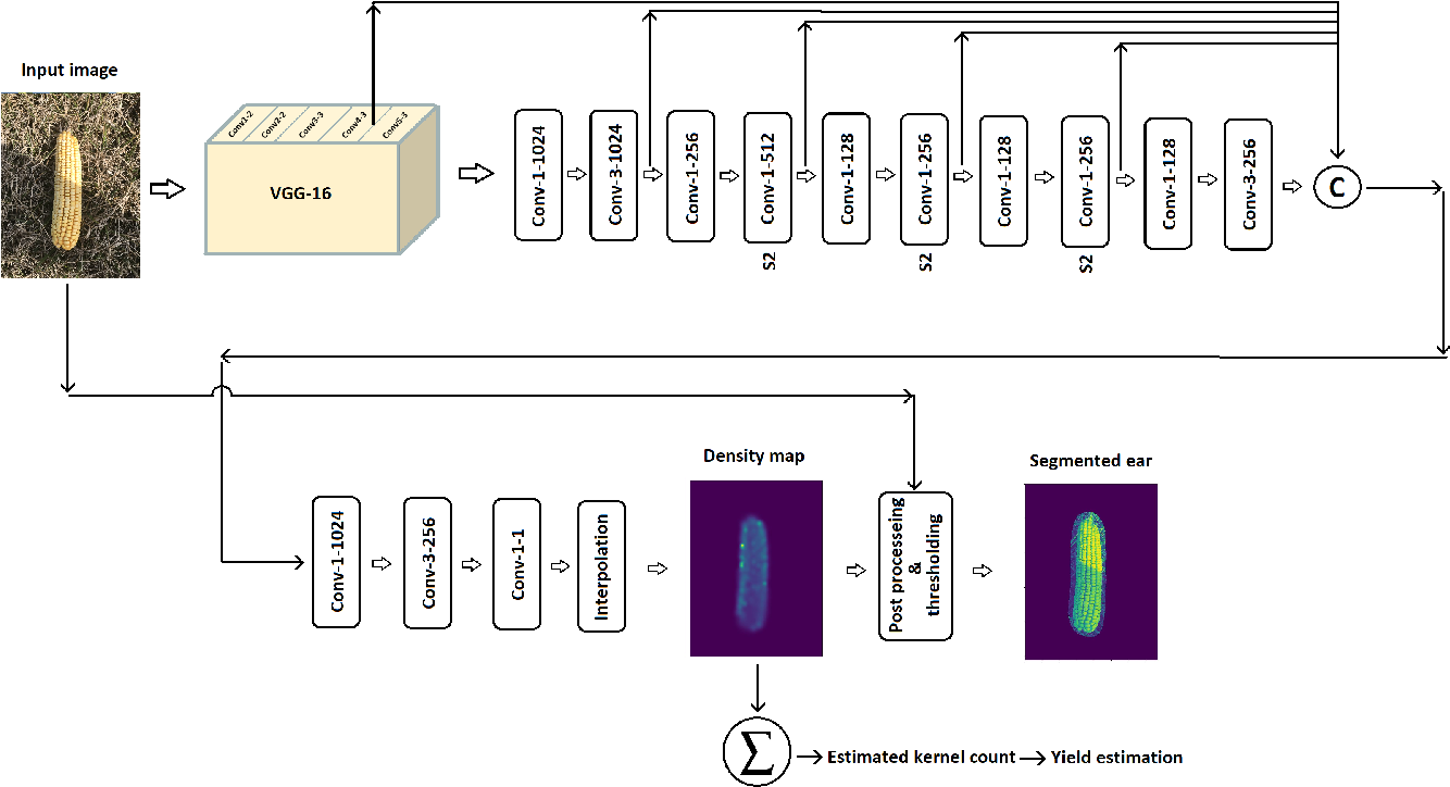 Figure 3 for DeepCorn: A Semi-Supervised Deep Learning Method for High-Throughput Image-Based Corn Kernel Counting and Yield Estimation
