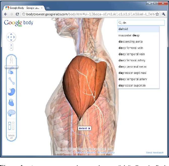 Google Body 3d Human Anatomy In The Browser Semantic Scholar