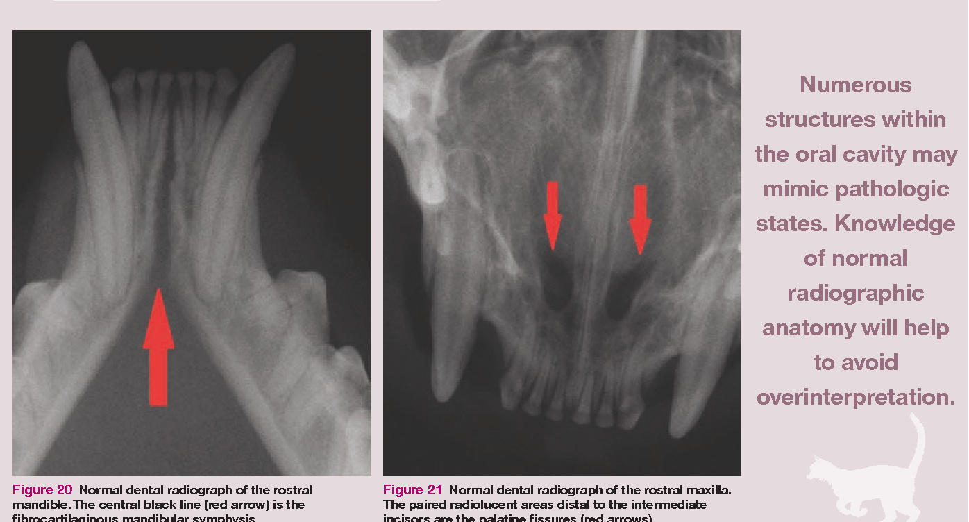 Figure 21 From Feline Dental Radiography And Radiology A Primer