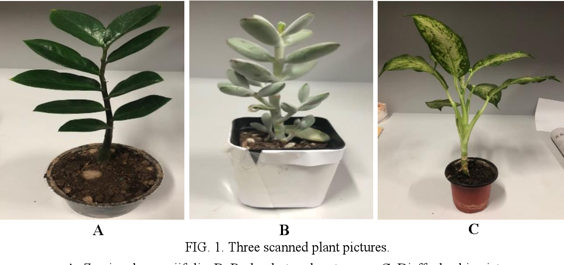 Figure 2 for Automated classification of stems and leaves of potted plants based on point cloud data