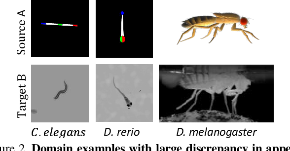 Figure 3 for Deformation-aware Unpaired Image Translation for Pose Estimation on Laboratory Animals